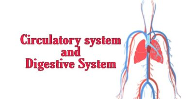 How does the circulatory system work with the digestive system