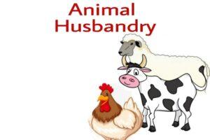 how is animal husbandry useful